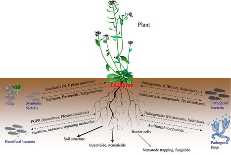Soil biology and biochemistry root exudates me for Soil biology and biochemistry