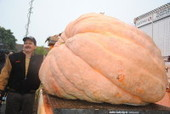 Will the World Pumpkin Heavyweight Record Go Down? - Patch.com | The Biggest in the World | Scoop.it