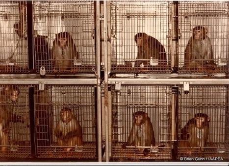 Ms. Jablonski's Class Blog: Animal Testing | Animal Testing | Scoop.it