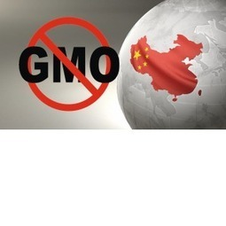 Breaking News: China Destroys 3 US Shipments of GM Corn | Adverse Health Effects of Genetically Engineered Foods | Scoop.it