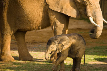 Fun Things To Do At Montgomery Zoo | Alabama Tourist Attractions | Scoop.it