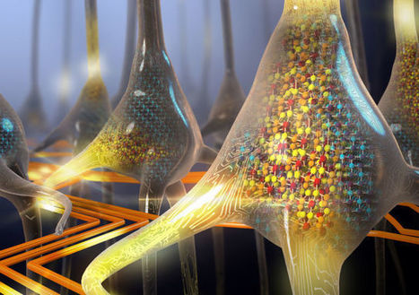 IBM creates world's first artificial phase-change neurons | Science, Technology, and Current Futurism | Scoop.it