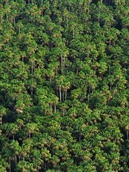 Peat is Amazon's carbon superstore | Rainforest EXPLORER:  News & Notes | Scoop.it