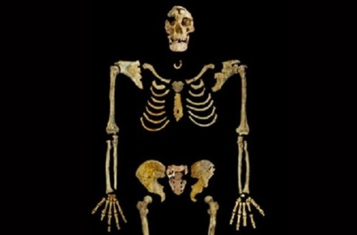 35,000-year-old skeleton to return to Egypt | The Archaeology News Network | Afrique | Scoop.it