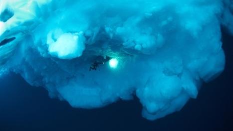 Plongée sous-marine sous la banquise   Plein les yeux et les oreilles   Scoop.it