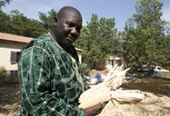Drought tolerant maize in Mali | MAIZE | Scoop.it