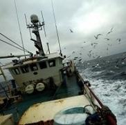 Fishing rules 'need radical change' - Scottish Headlines - Fife Today | Business Scotland | Scoop.it