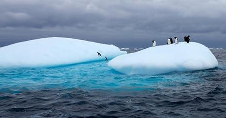 #Antarctica Recorded Its #Hottest #Temperature On Record This Week! | Rescue our Ocean's & it's species from Man's Pollution! | Scoop.it