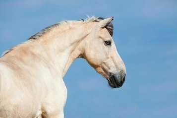 The Horse | Could Horses' Neck Postures Indicate Back Pain? | TheHorse.com | Back Pain in Horses | Scoop.it