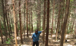 World Congress on Agroforestry - Using eucalyptus trees to drain wastewater, improve the environment | Australian Plants on the Web | Scoop.it
