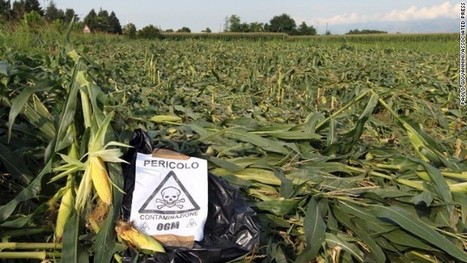 A call for GMO labeling | @FoodMeditations Time | Scoop.it