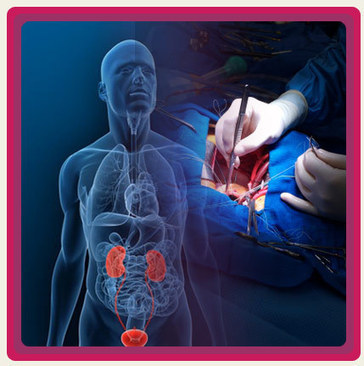 Kidney Transplant Cost in India | Renal Failure Treatment - Kidney Transplant Cost in India | Scoop.it