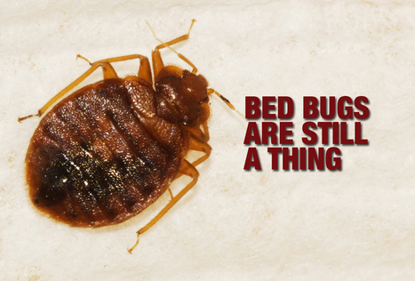 Avoiding the Bedbugs' Bite - | Bed Bugs | Scoop.it