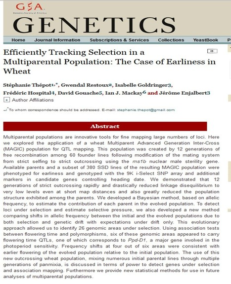 Efficiently Tracking Selection in a Multiparental Population: The Case of Earliness in Wheat | Plant multi-parent advanced generation intercross (MAGIC) populations | Scoop.it