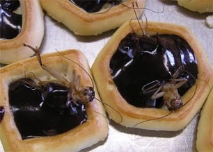 Mangerons-nous un jour des insectes ?   Entomophagy: Edible Insects and the Future of Food   Scoop.it