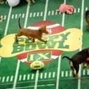 Chicago rescue pups take the field in Puppy Bowl X | Troy West's Radio Show Prep | Scoop.it