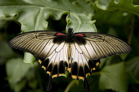 35 Most Beautiful Butterfly Pictures | Incredible Snaps | Freefire Nature | Scoop.it