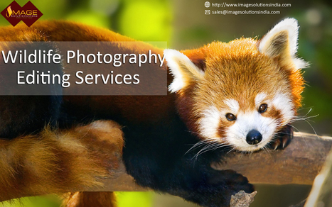 Wildlife Photography Editing Services - Editing Wildlife Photos | Outsource image editing services, Image Editing Services | Scoop.it
