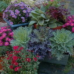 Fall Container Gardens | Annie Haven | Haven Brand | Scoop.it