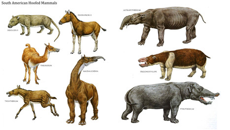 Mammal diversity exploded immediately after dinosaur extinction | Amazing Science | Scoop.it
