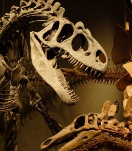 Les oeufs à l'origine de l'extinction des dinosaures ? | Merveilles - Marvels | Scoop.it