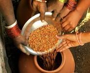 Campagne pour la liberté des semences | Abeilles, intoxications et informations | Scoop.it