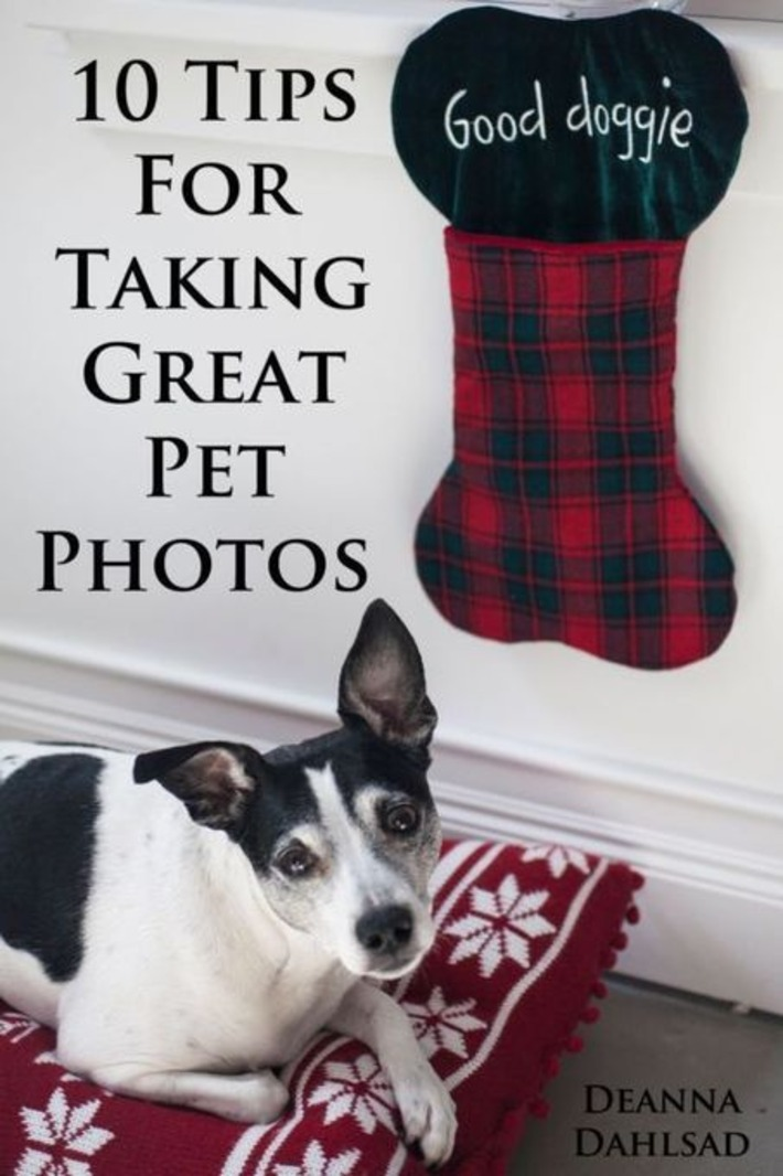 10 Tips For Photographing Your Pet | You Call It Obsession & Obscure; I Call It Research & Important | Scoop.it
