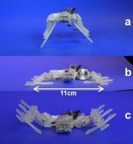 3D Printer-Built Robot Has Insect Moves   Biomimicry   Scoop.it