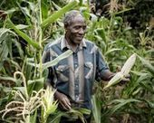 Research yields maize varieties resistant to stalk borer pest | Agriculture news & innovations | Scoop.it