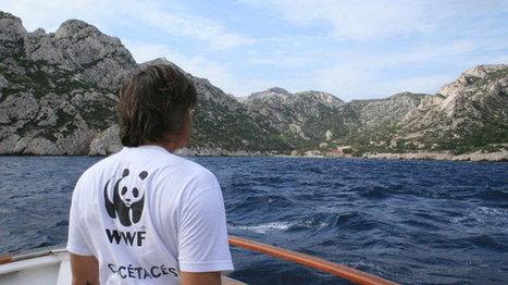 Les calanques s'offrent une image internationale | Séjours nature dans le Sud de la France: Garrigue et Calanques | Scoop.it