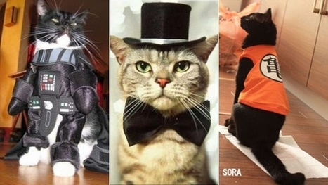 The Wonderful World of Cat Cosplay | Cosplay News | Scoop.it