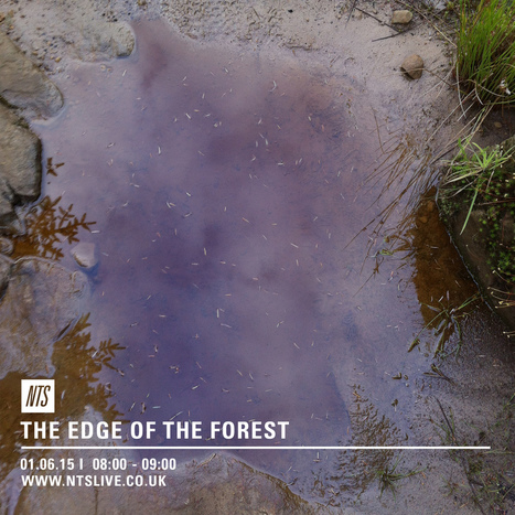 The edge of the forest | DESARTSONNANTS - CRÉATION SONORE ET ENVIRONNEMENT - ENVIRONMENTAL SOUND ART - PAYSAGES ET ECOLOGIE SONORE | Scoop.it