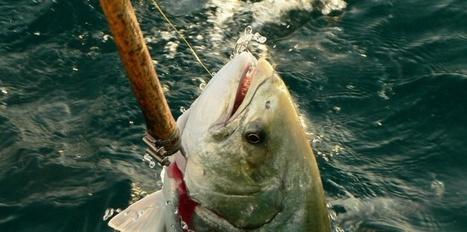 En Méditerranée, les pêcheurs du dimanche menacent aussi l'écosystème | Le flux d'Infogreen.lu | Scoop.it