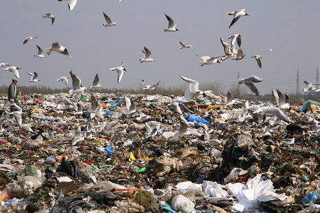 Incinerating trash is a waste of resources | Environment! | Scoop.it