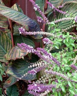 Blue Planet Garden Blog: Garden Designers Roundtable: Memory and Plants   Annie Haven   Haven Brand   Scoop.it