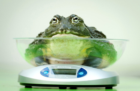 London Zoo's Annual Weigh-In and Animal Measurement - Hartford ... | Measurement | Scoop.it