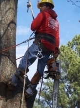 In Need of a Good Tree Cutting Service? Make Sure to Look for a Professional Arborist! | environmentally friendly | Scoop.it
