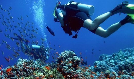 A Scuba Diver Lost in San Diego | All about water, the oceans, environmental issues | Scoop.it