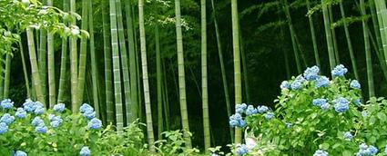 ¿ Sabes Cuál es… ? la Planta más útil del mundo | Noticias de ecologia y medio ambiente | BROTES DE NATURALEZA | Scoop.it