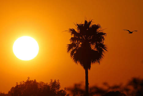 Global warming already having dramatic impacts in California, new report says | San Jose Mercury News | Concept MERCURY 1 project. | Scoop.it
