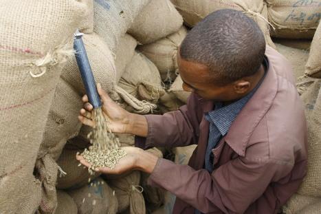 Afrique: Transformer les ressources agricoles est une priorité | Confidences Canopéennes | Scoop.it