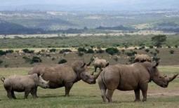 Safari in Kenya, Aberdere National Park, Wildlife Kenya Safaris, Gyan Expedition | Gyantz.com: Camping Safaris Tanzania | Scoop.it