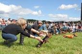 Bunny's Blog: Weiner Dog Races Please Crowd at PA Oktoberfest | Pet News | Scoop.it