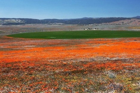 Antelope Valley Poppy Reserve in California | Interesting Reading | Scoop.it