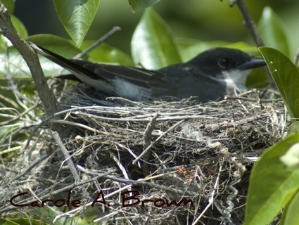 Ecosystem Gardening Essentials: Provide Safe Places to Raise Young | Birds and Birding | Scoop.it