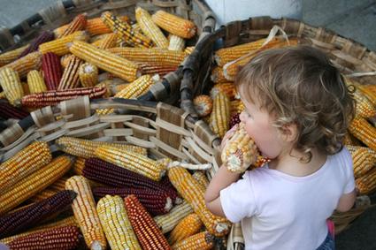 Des maisons de semences paysannes pour se libérer de l'agrobusiness - Souveraineté alimentaire - Basta ! | CAP21 | Scoop.it