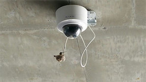 Hummingbird builds nest on cable, UA sets up web cam | KVOA (TV-Channel 4 Tucson) | CALS in the News | Scoop.it