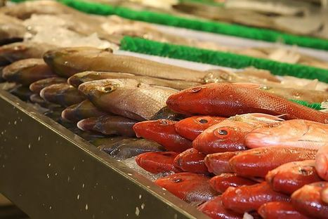 That Fish for Dinner? It Comes with a Dose of Prescription Drugs   GarryRogers Biosphere News   Scoop.it