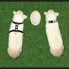 Custom dog collars