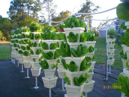 Visit Kevin Newell's Hydroponic Organic Vegetable Farm | Vertical Farm - Food Factory | Scoop.it